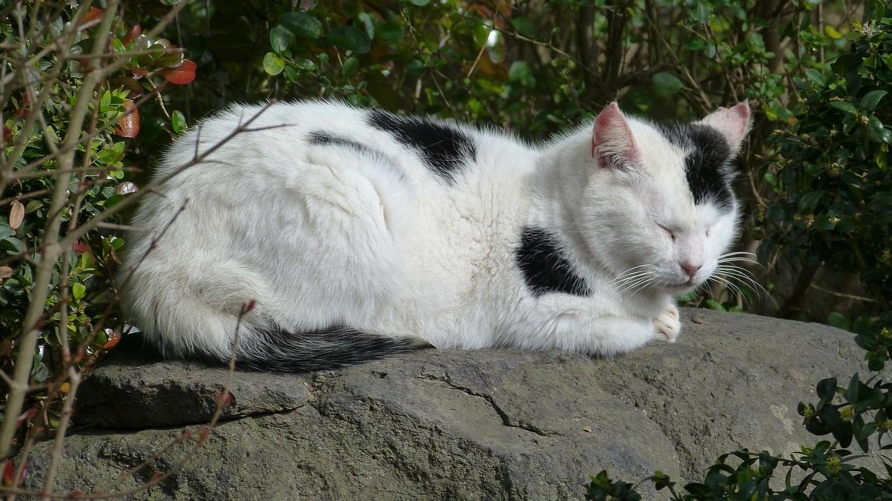 черно-белые коты фото (5)