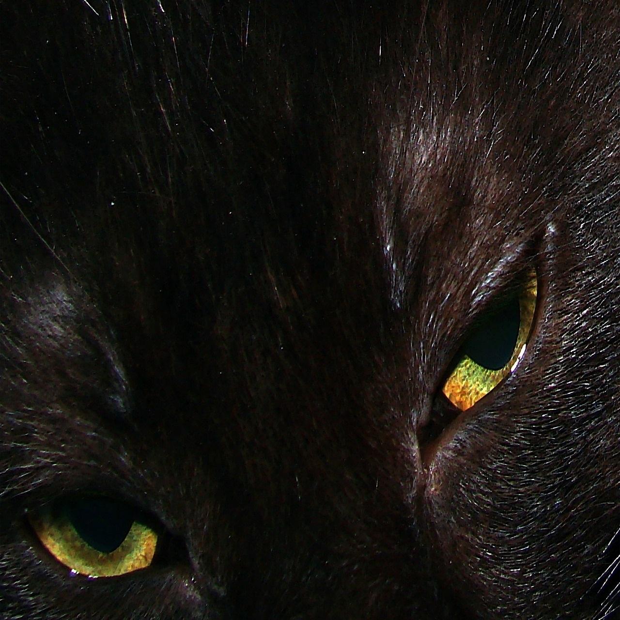 черные коты и кошки фото (2)