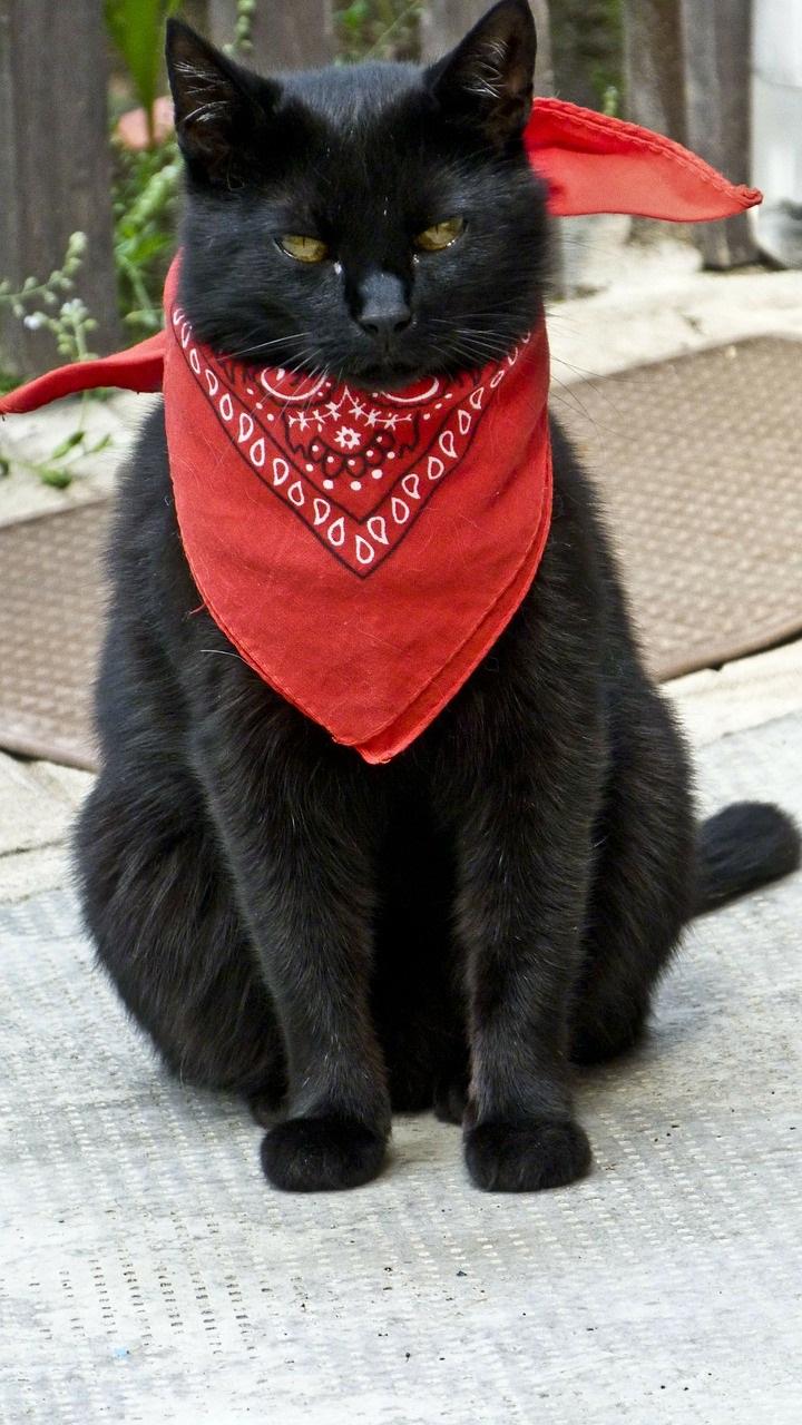 черные коты и кошки фото (3)