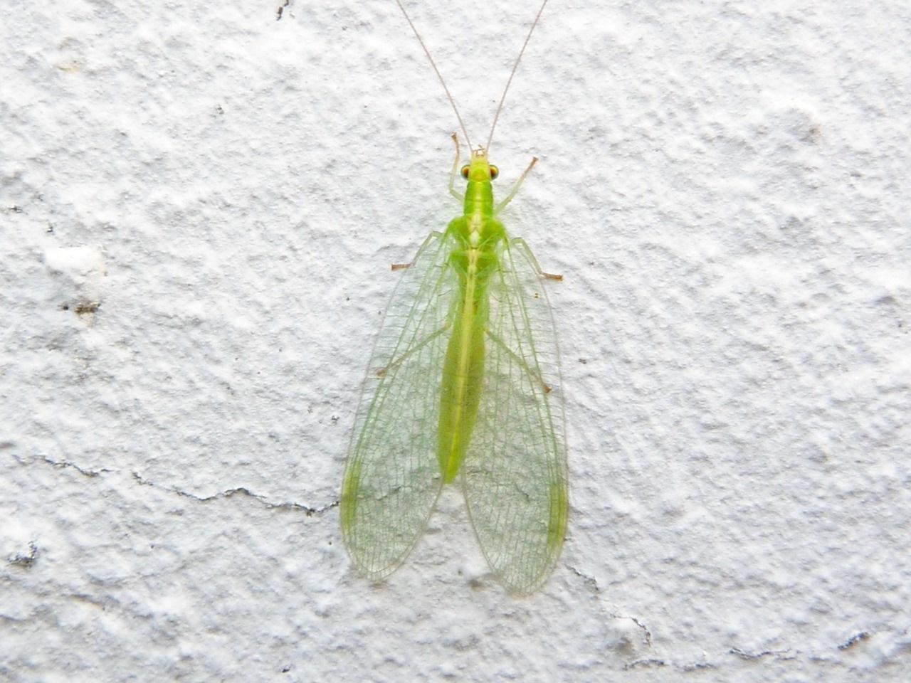 полезных насекомых в саду
