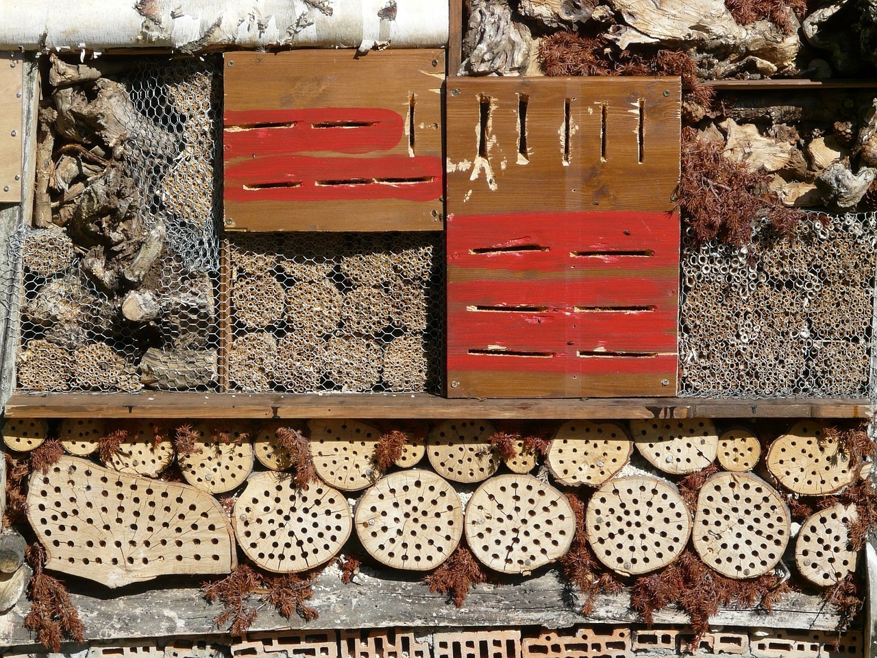 полезные насекомые сада и огорода 11