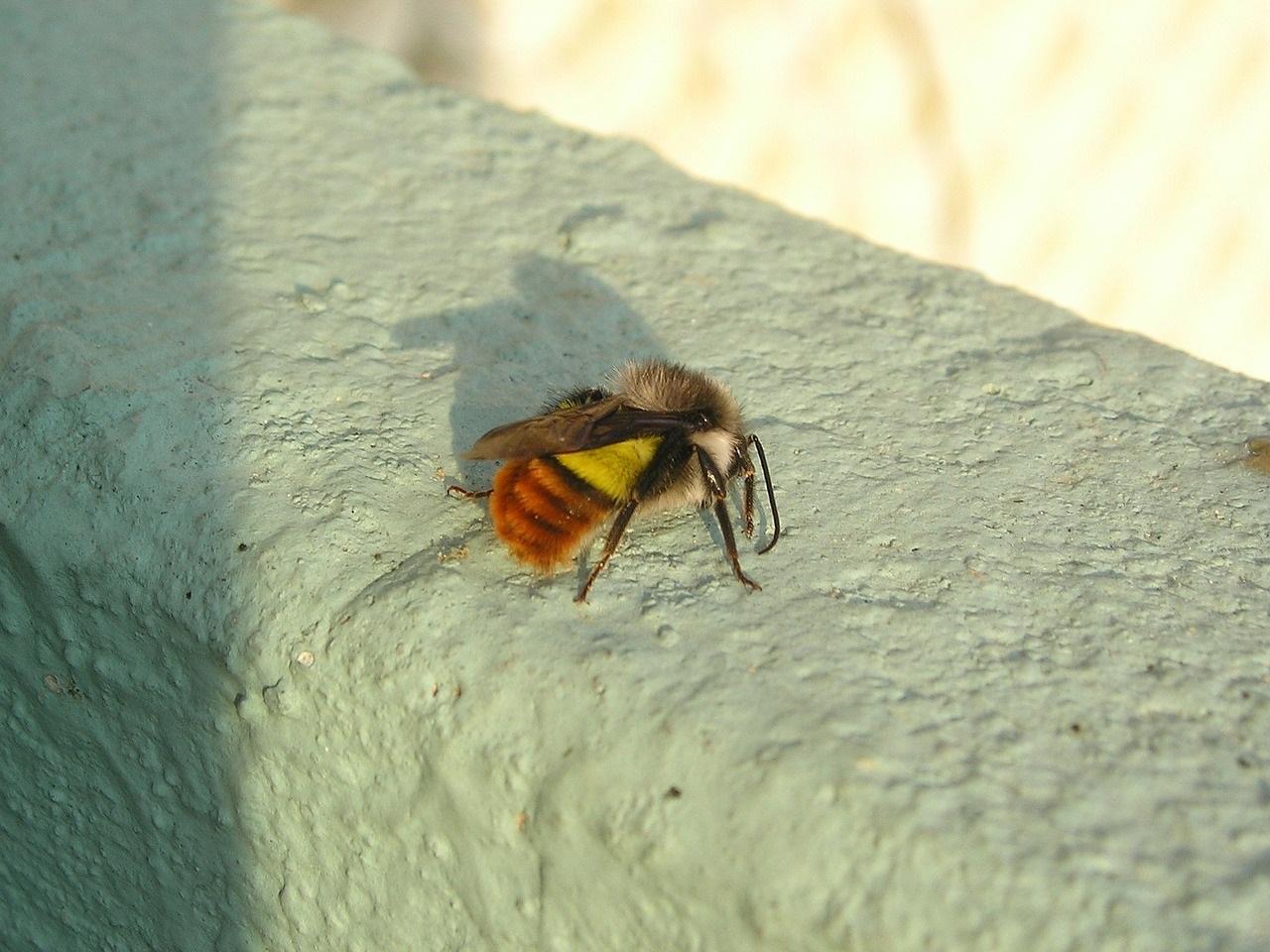 полезные насекомые сада и огорода 13