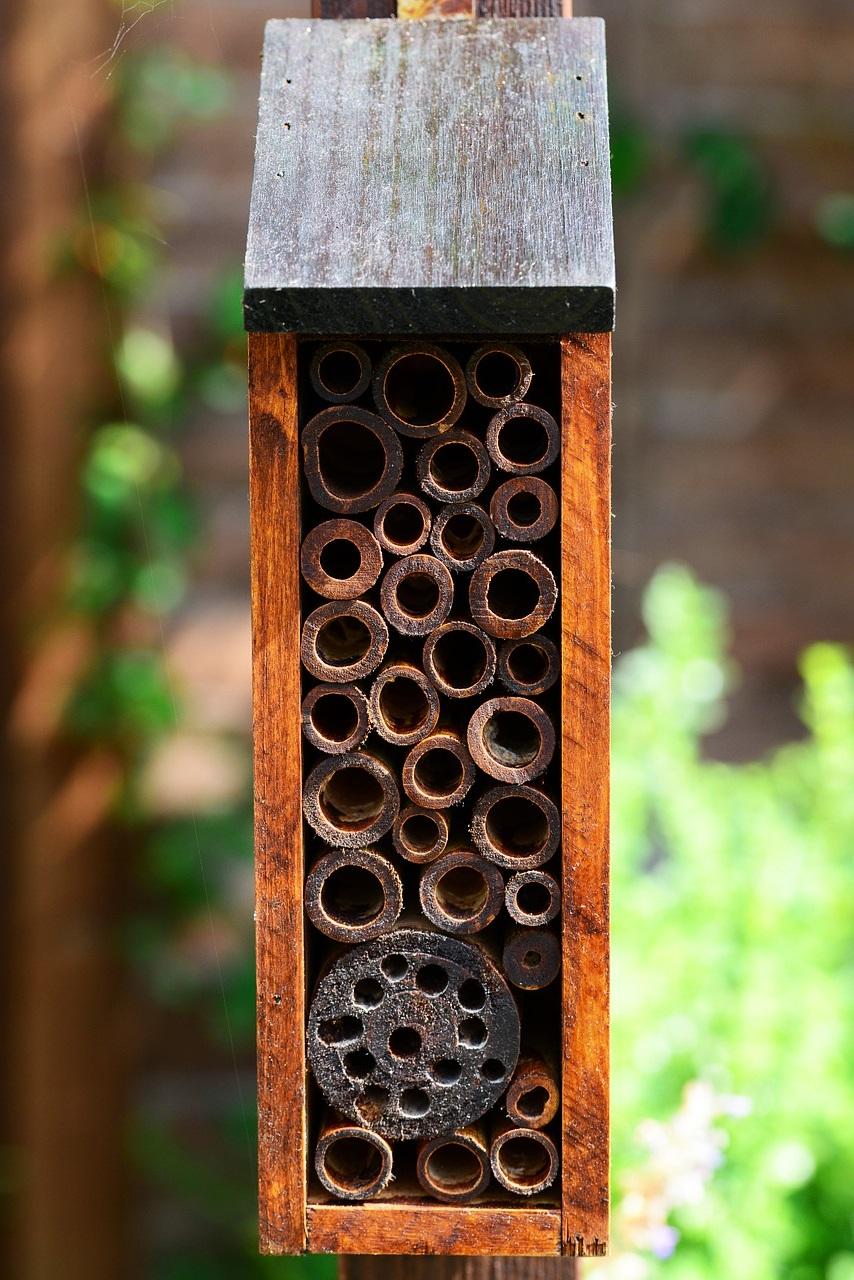 полезные насекомые сада и огорода 2