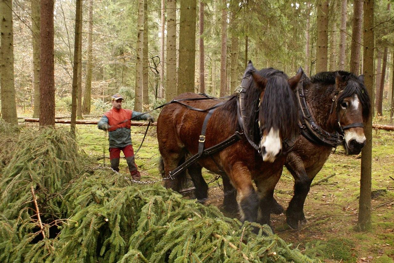 рабочие лошади фото