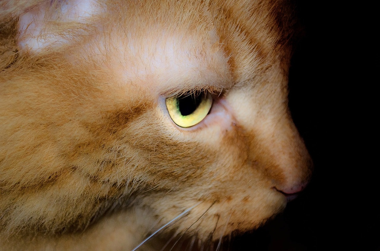 рыжие коты и кошки фото (2)
