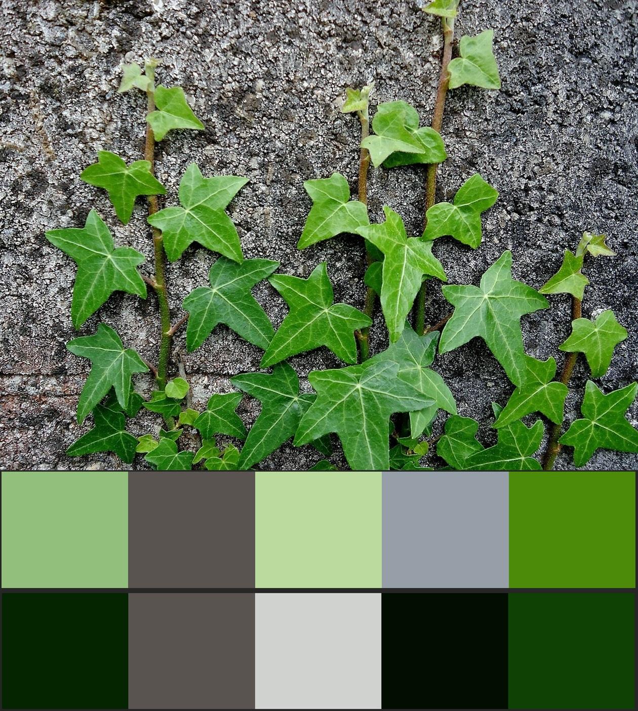 сочетание серого цвета в природе 16-vert