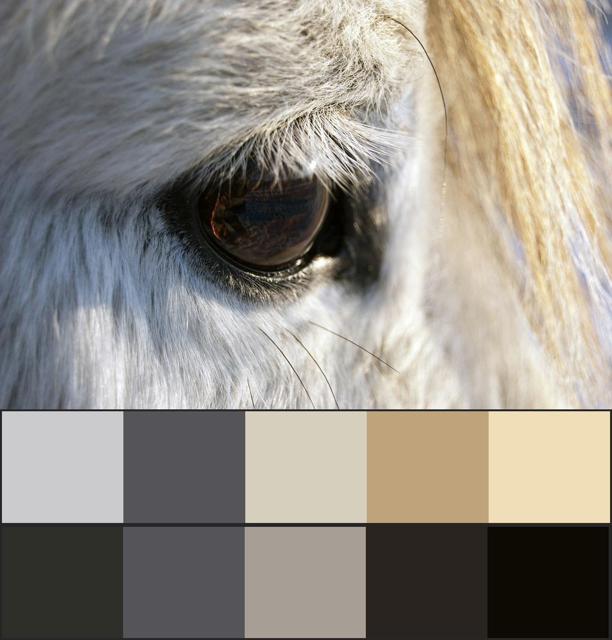 сочетание серого цвета в природе 19-vert