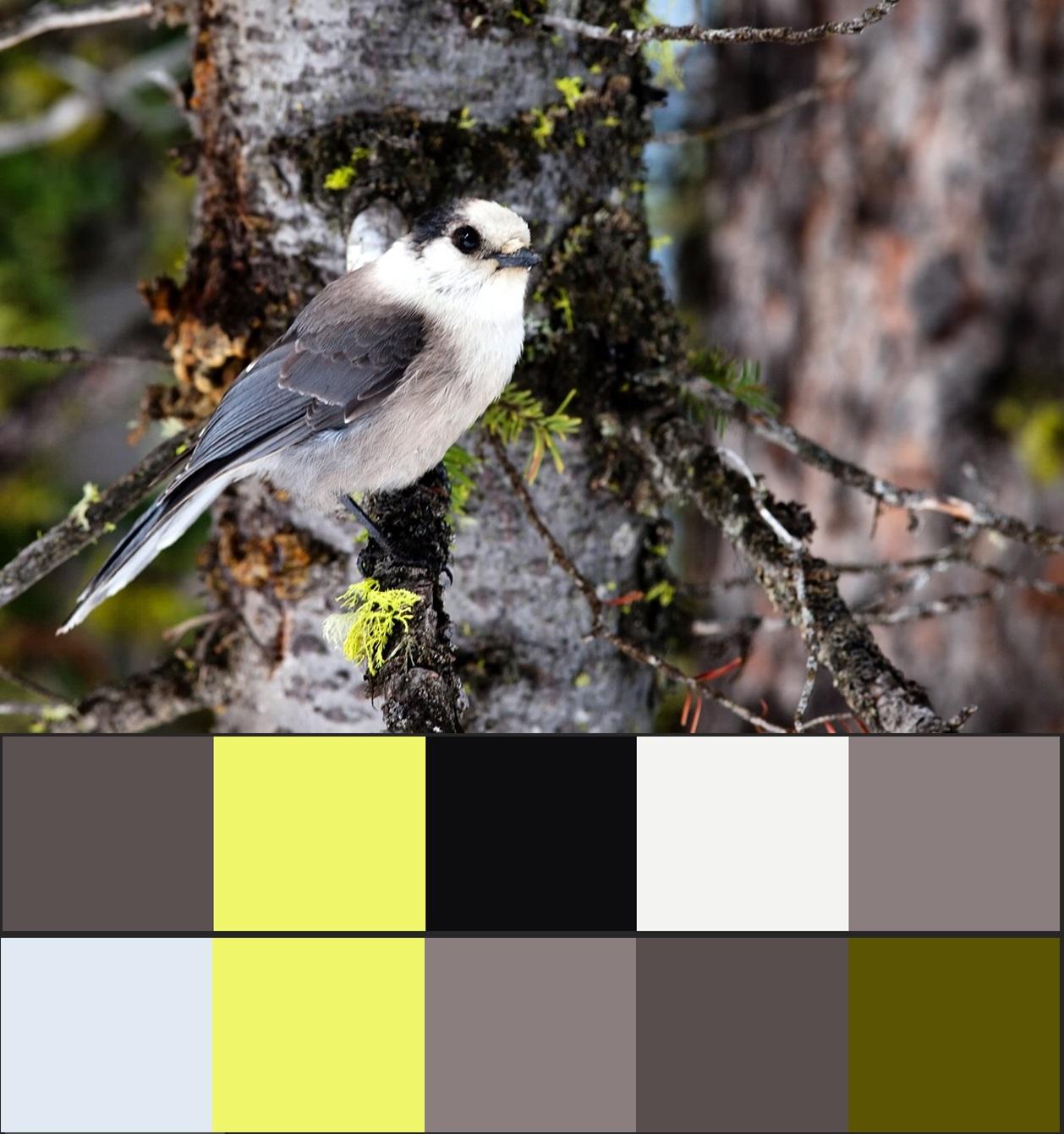 сочетание серого цвета в природе 26-vert