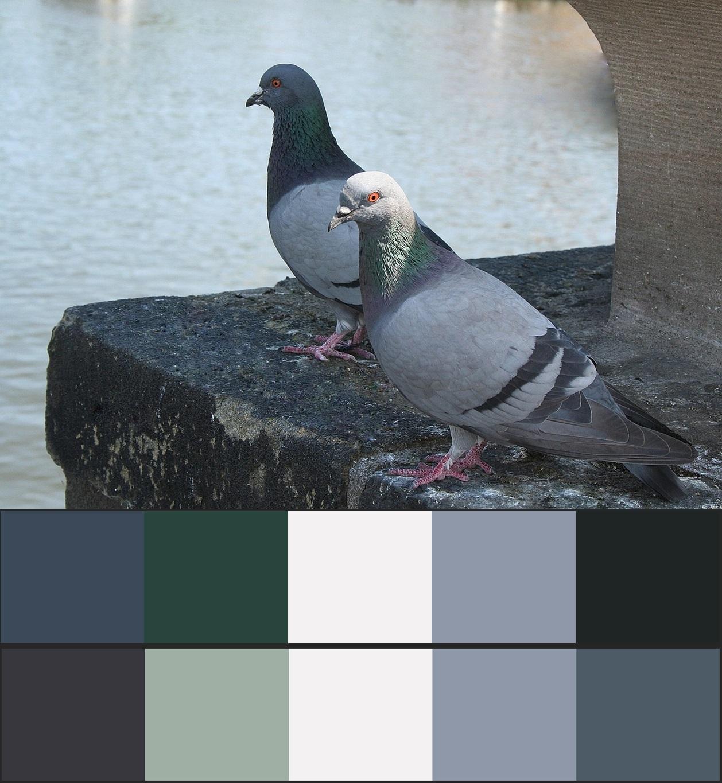 сочетание серого цвета в природе 7-vert