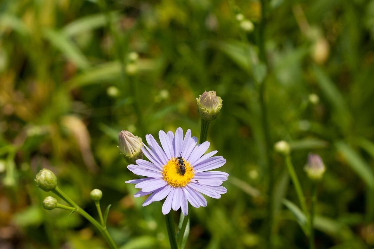 полевые цветы фото12