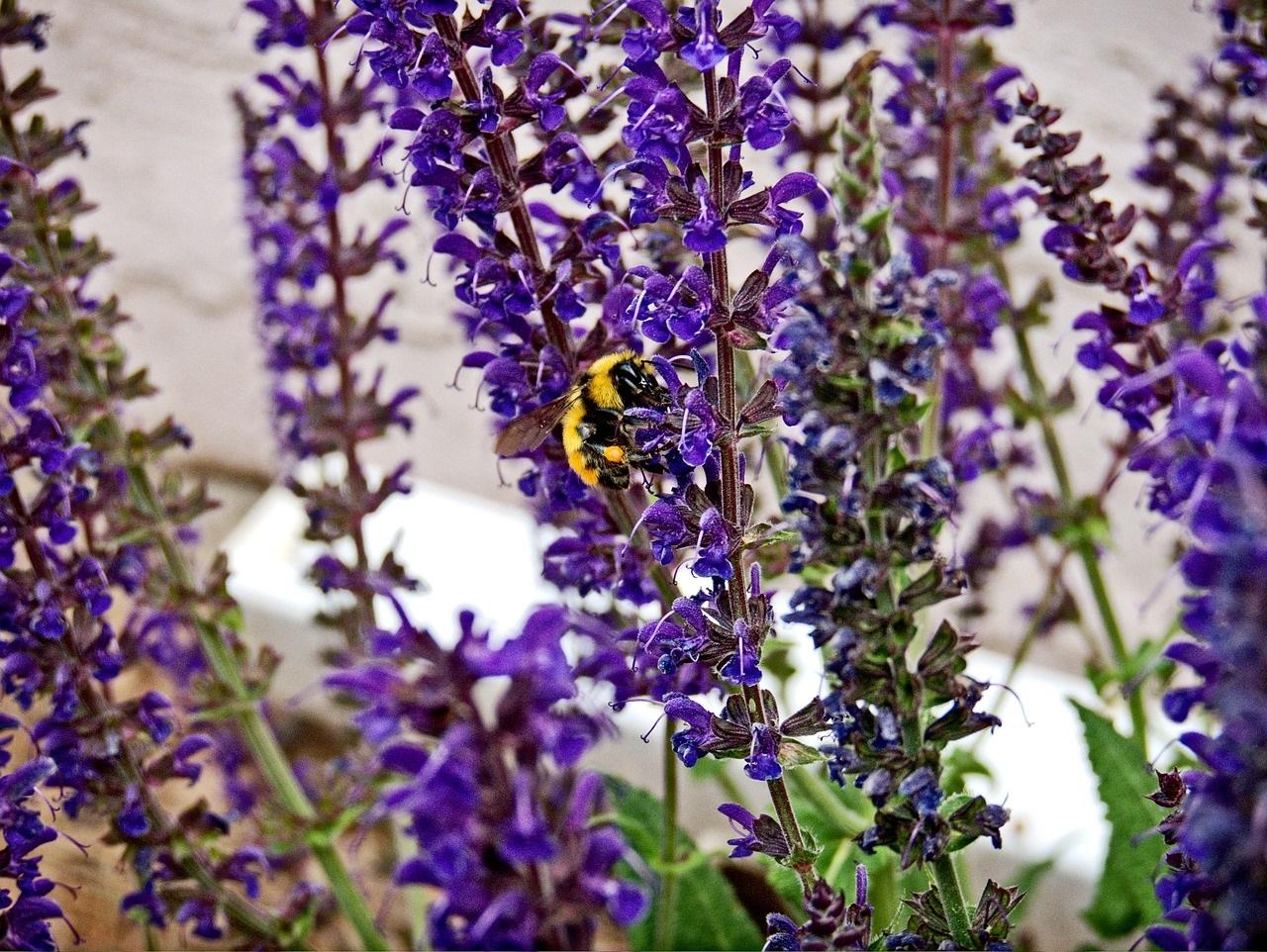 полевые цветы фото14