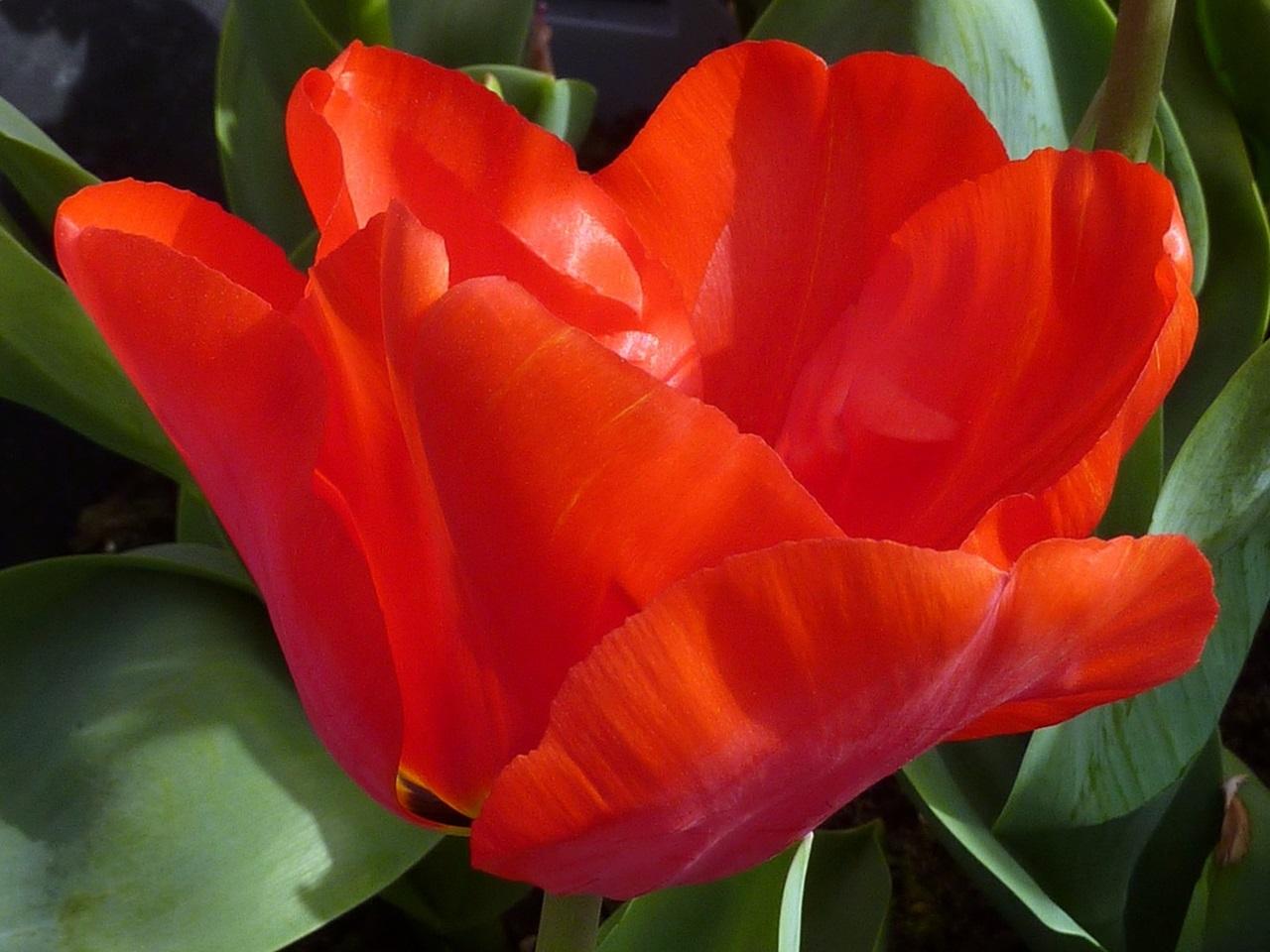 фото цветы весна 14