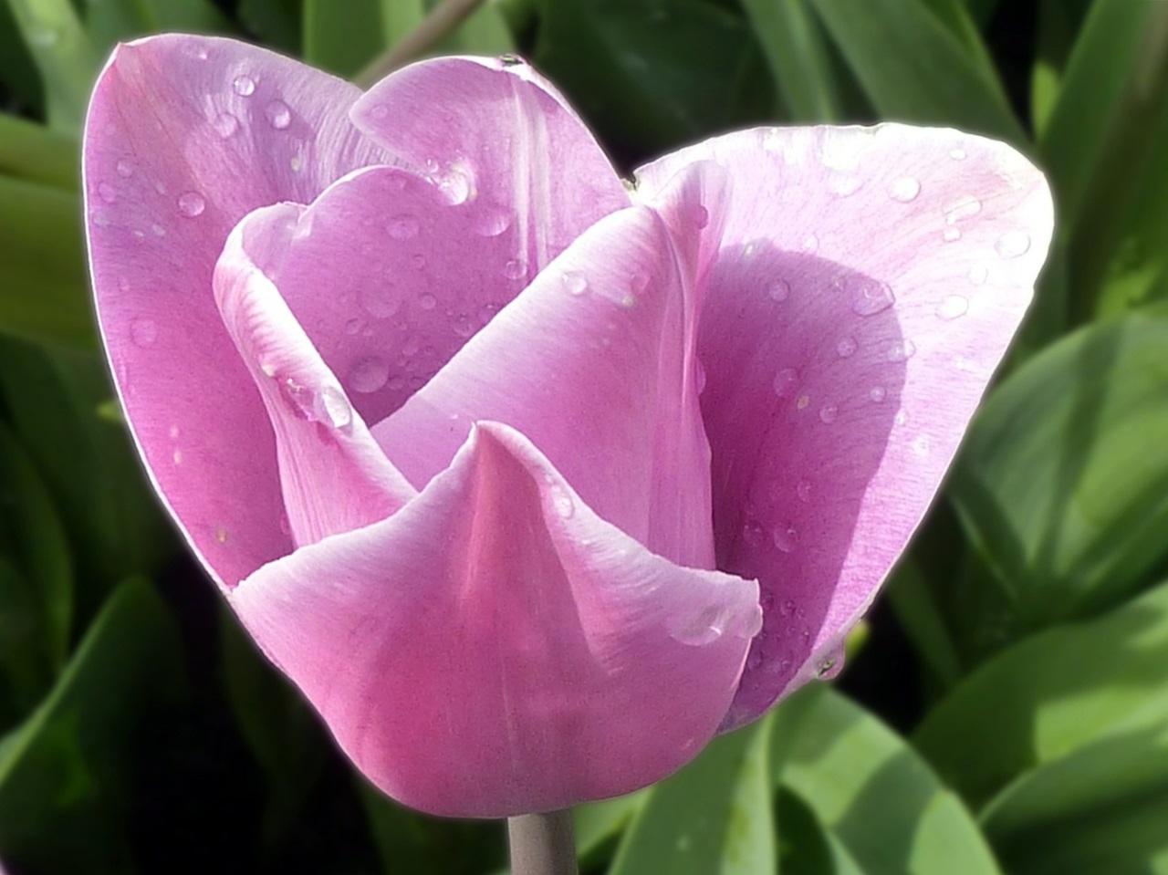 фото цветы весна 15