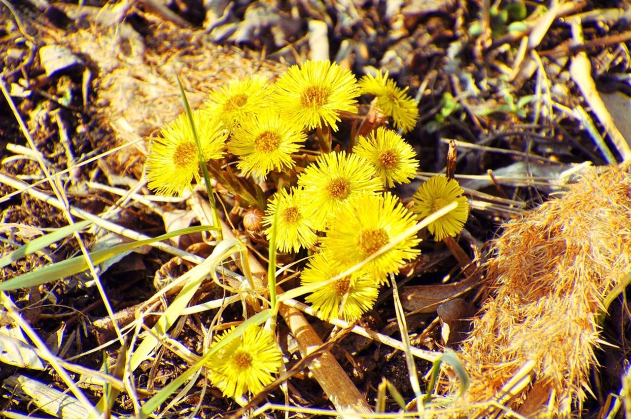 фото цветы весна 16