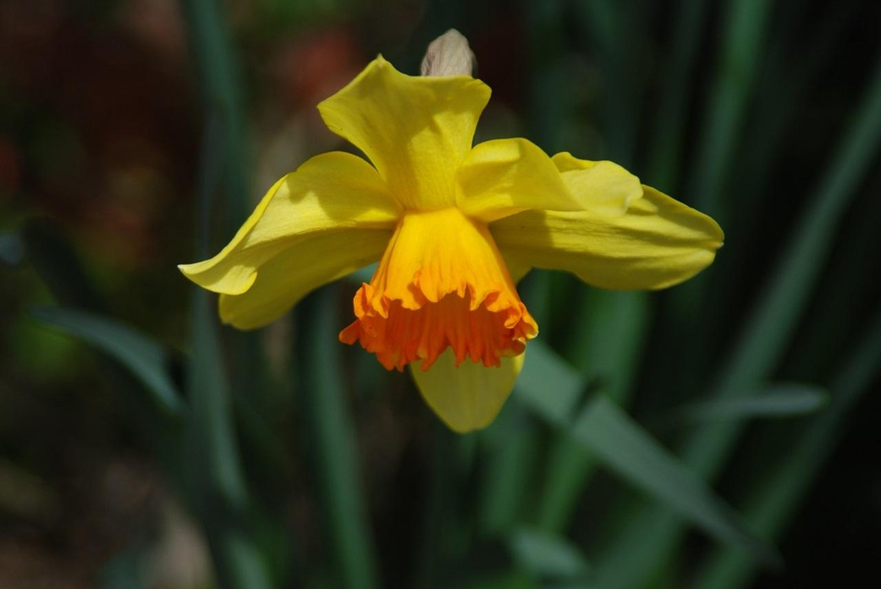 фото цветы весна 18