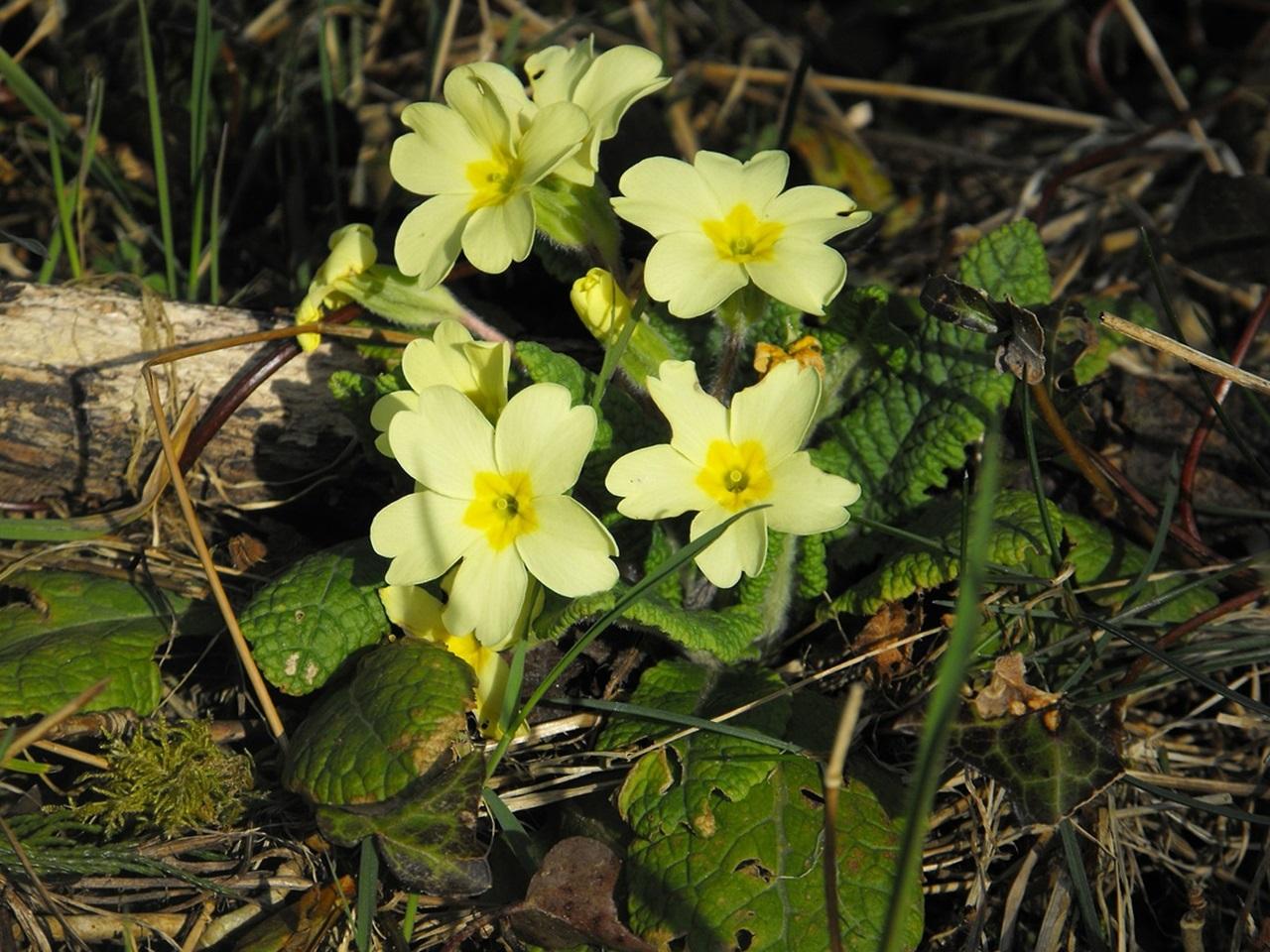 фото цветы весна 21