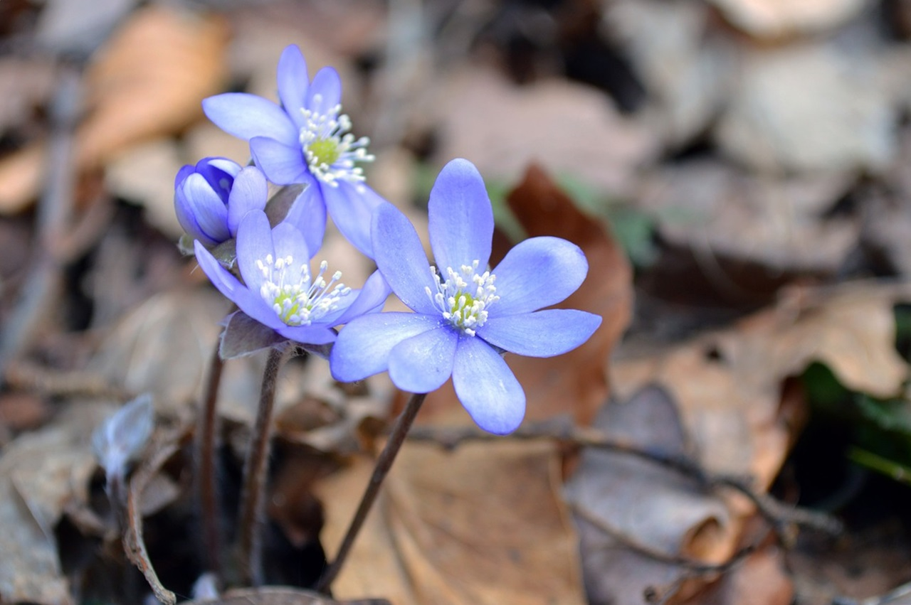 фото цветы весна 3