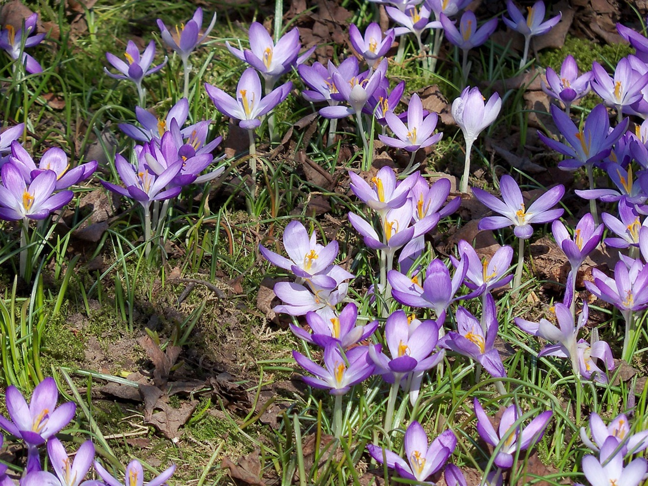 фото цветы весна 4