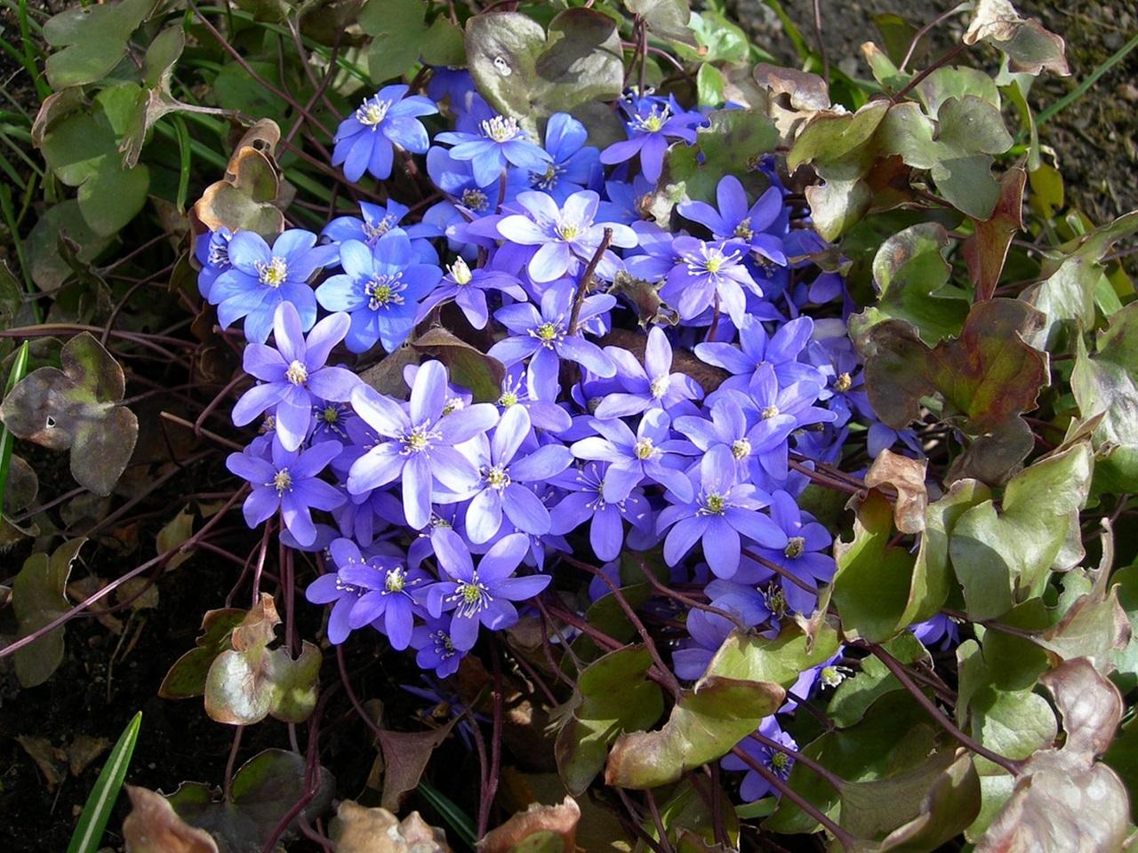фото цветы весна