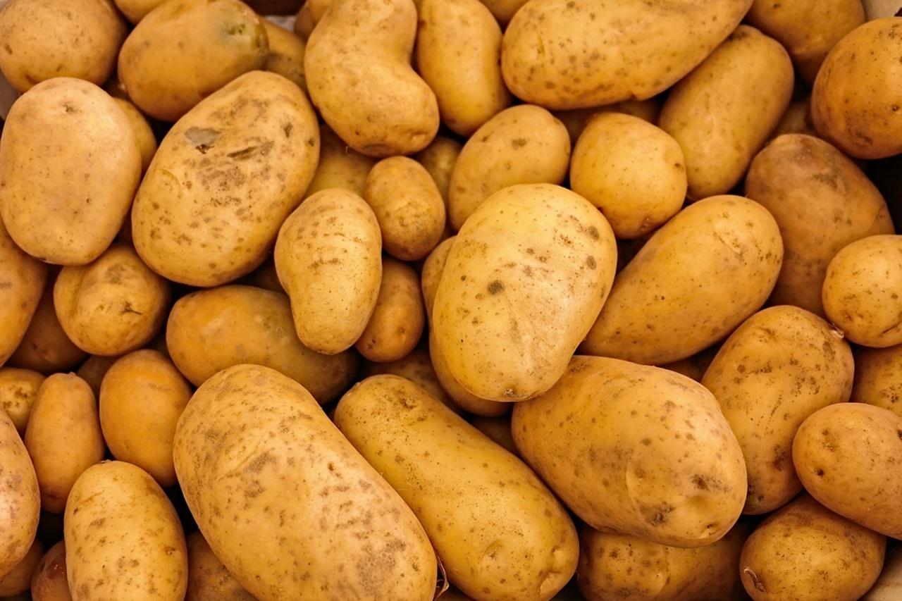 сорта картофеля 2