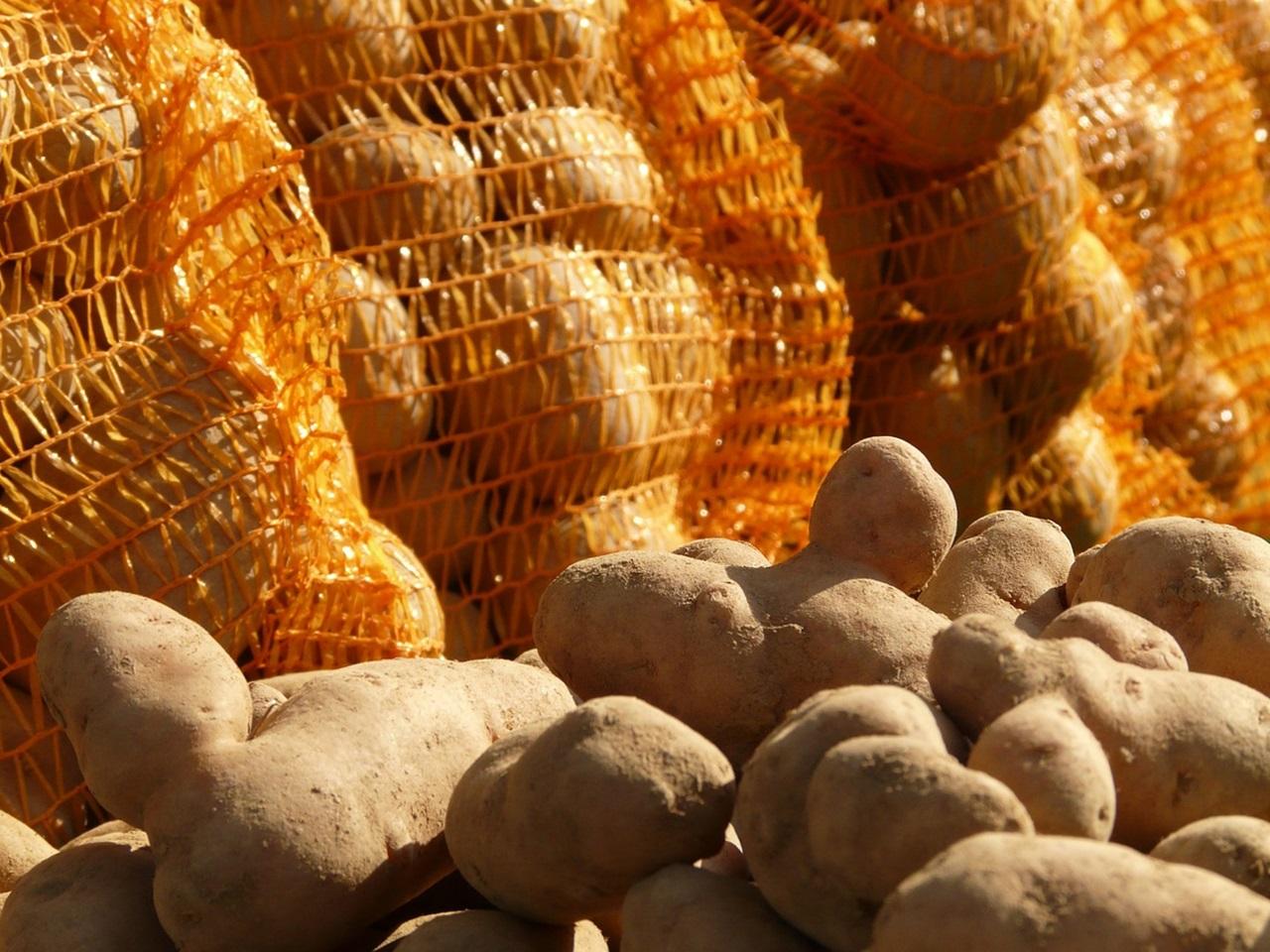 сорта картофеля 5