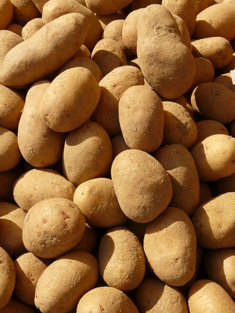 сорта картофеля 6