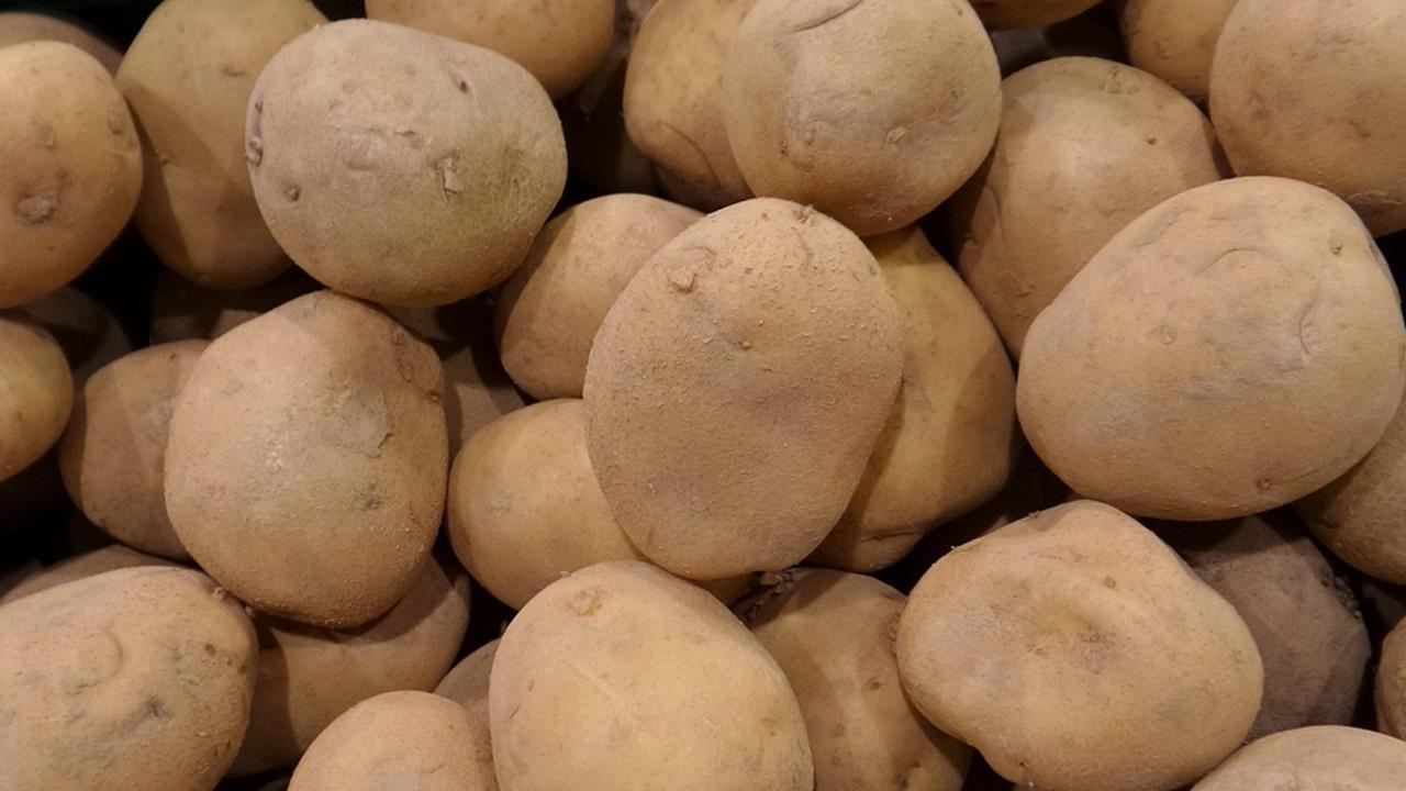 сорта картофеля 7