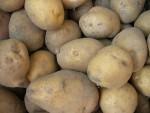 Сорта картофеля для Северо-Кавказского региона