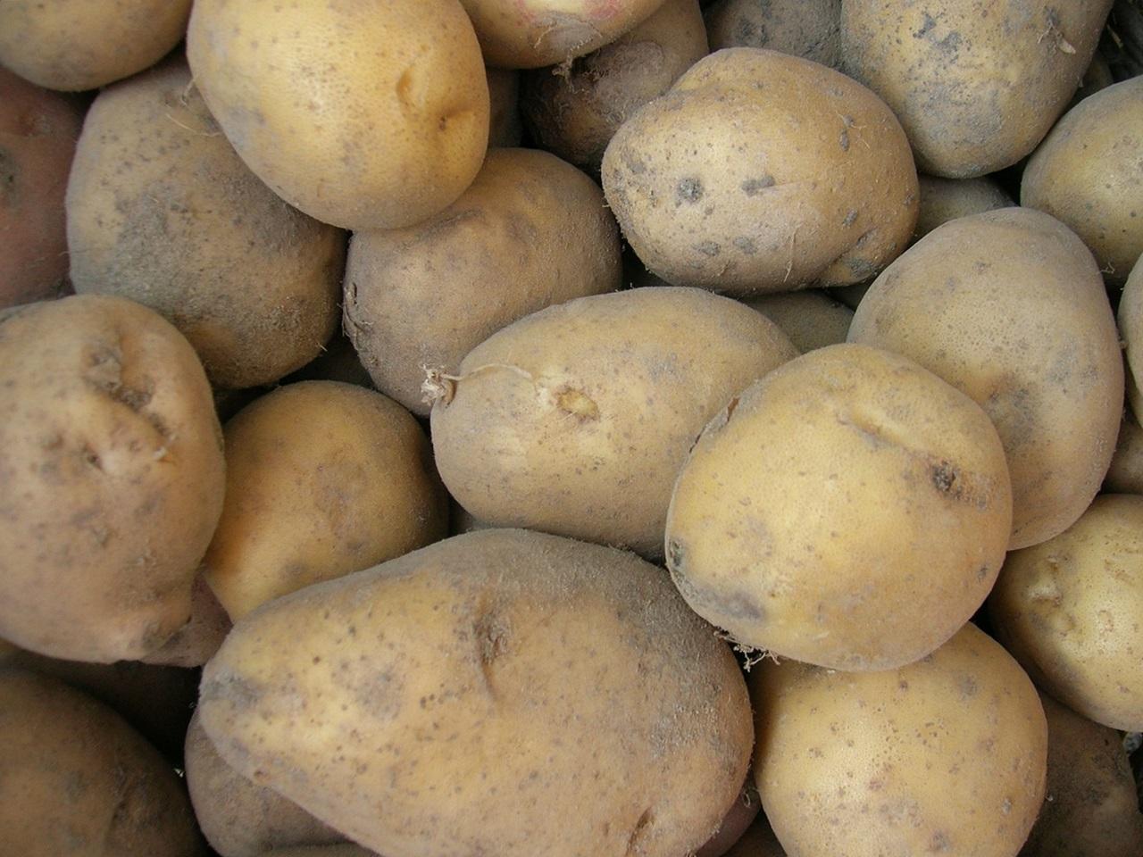 сорта картофеля 8