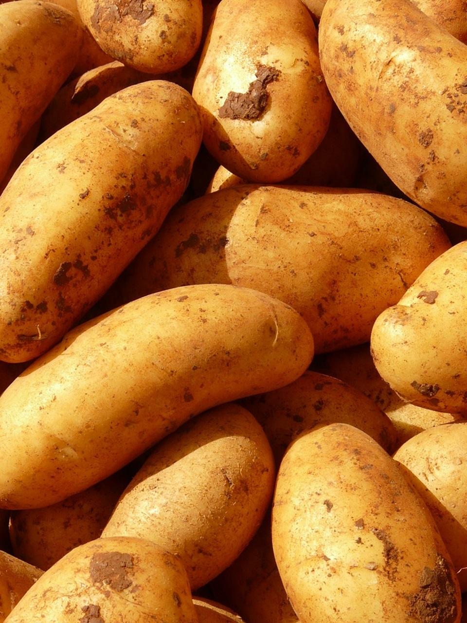 сорта картофеля 9