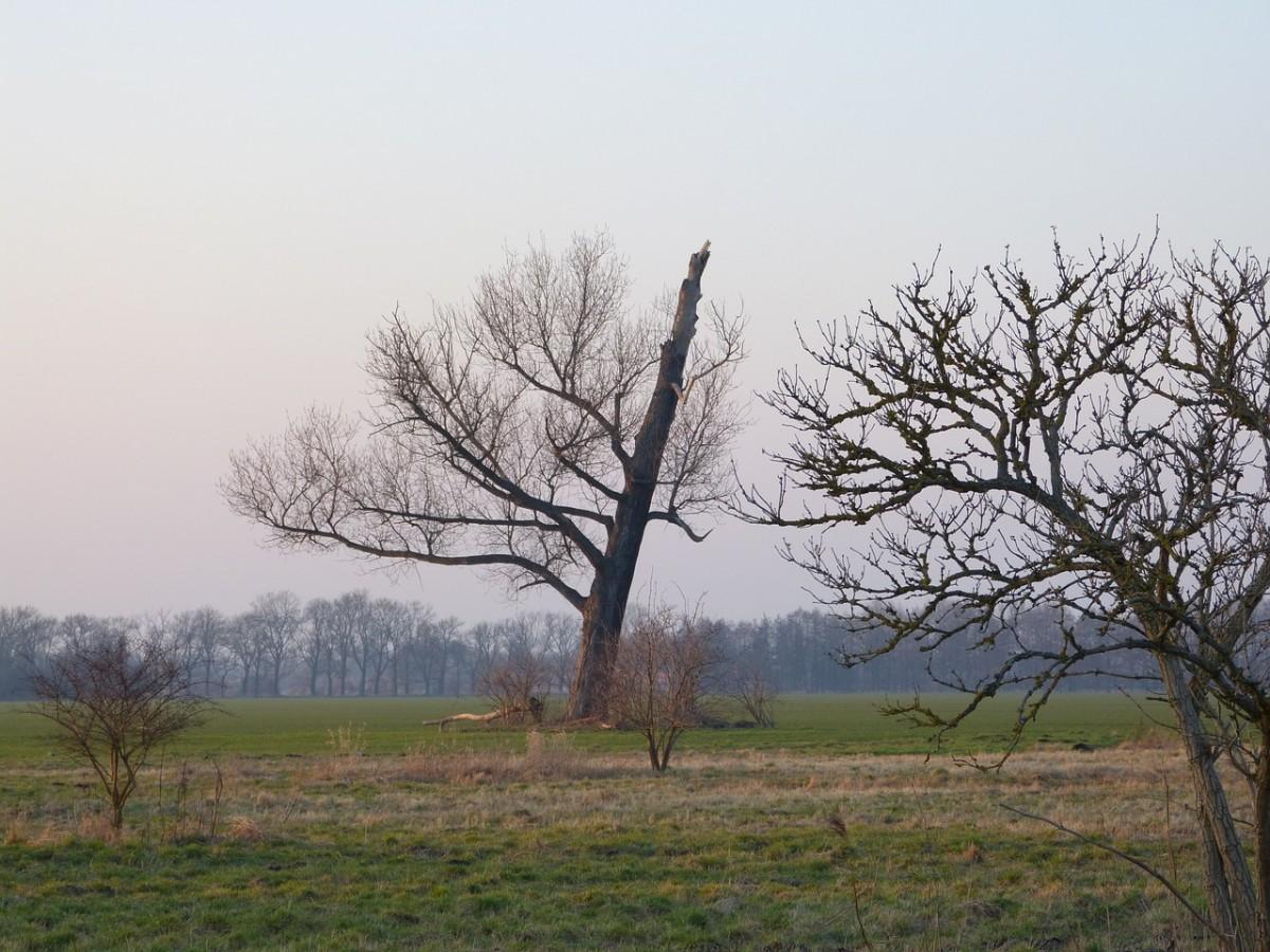молния в дерево фото 1