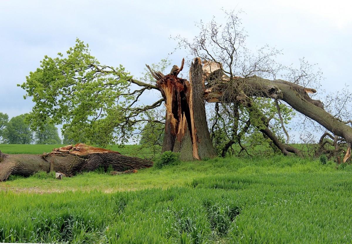 молния в дерево фото 2