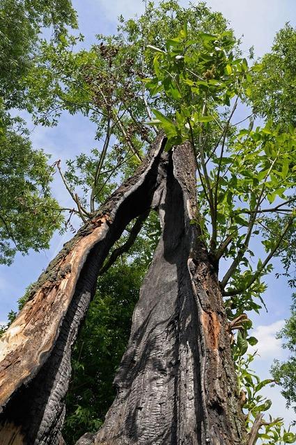 молния в дерево фото
