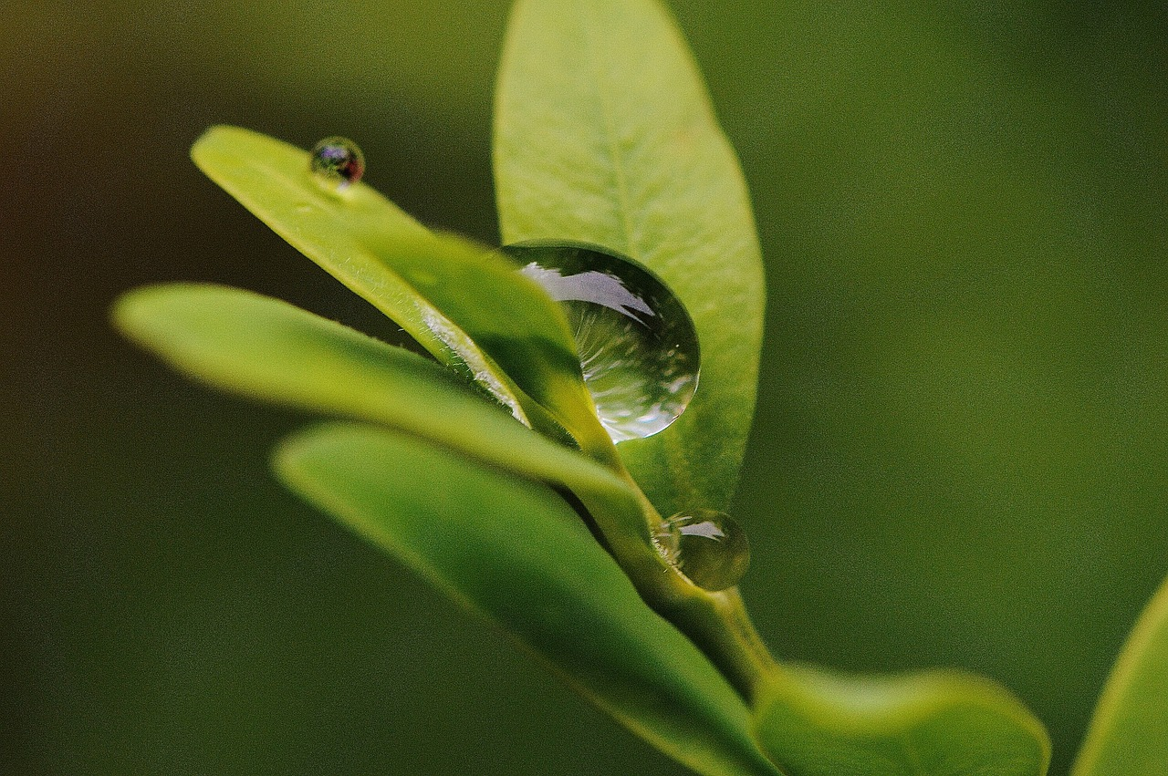 поглощние веществ растением