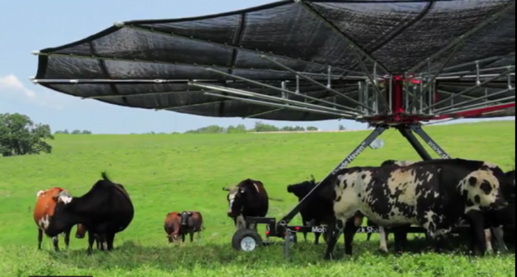 тент для коров 3