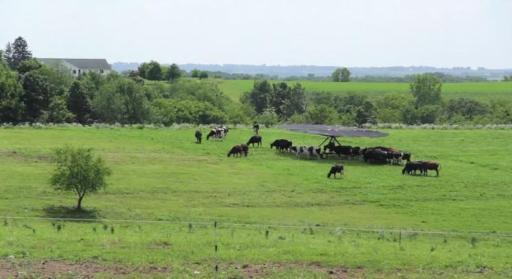тент для коров