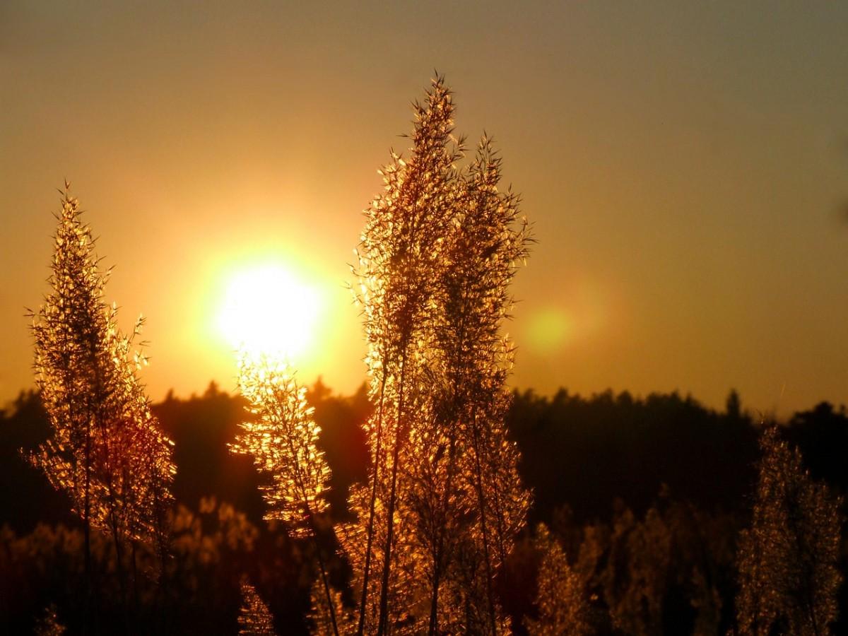 sun-361840_1280