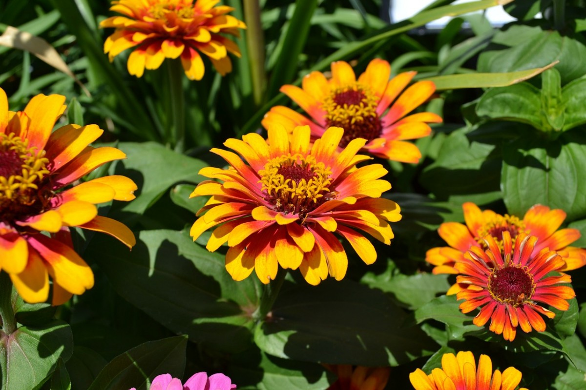 лето цветы 2