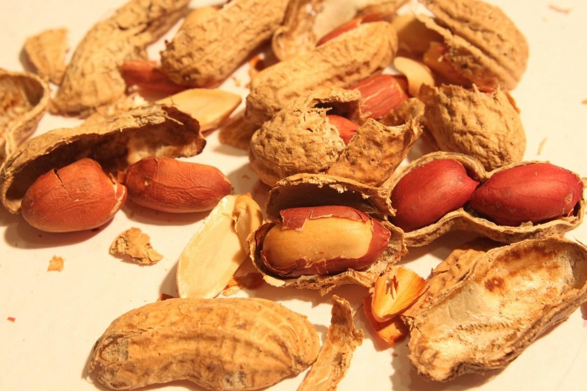 Вырастить фундук из ореха в домашних условиях