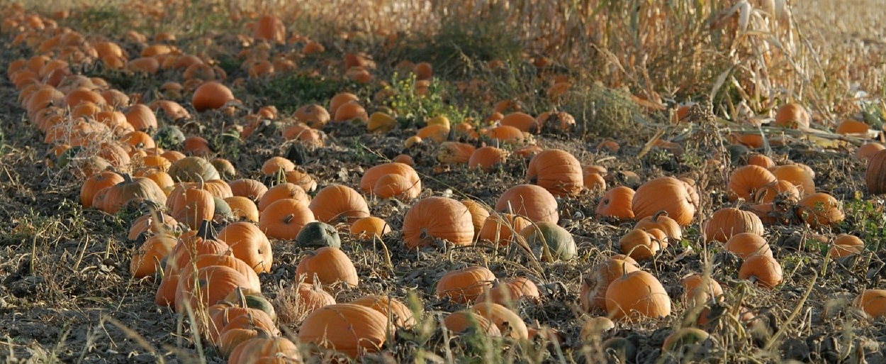 октябрь фото