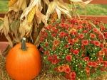 Осенние работы в огороде в октябре
