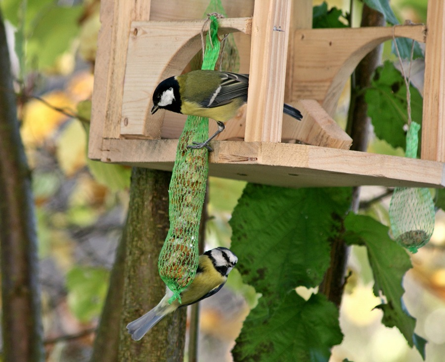 Как кормить птиц зимой 1