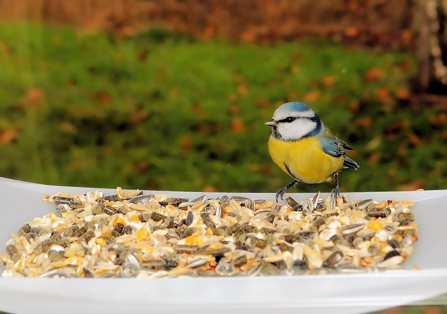 Как кормить птиц зимой 14
