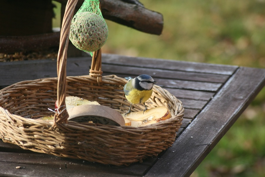 Как кормить птиц зимой 6