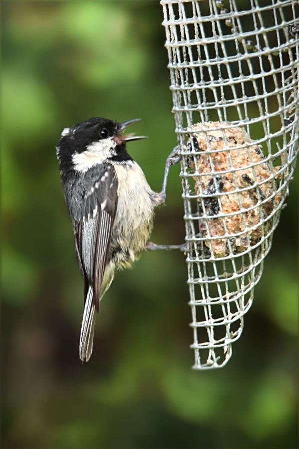 Как кормить птиц зимой 8