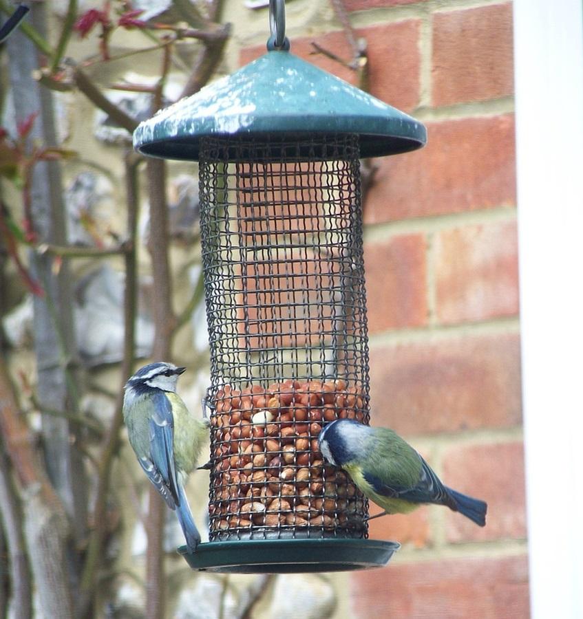 Как кормить птиц зимой