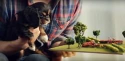 Смешное видео про собаку