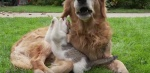 Необычная дружба животных (видео)