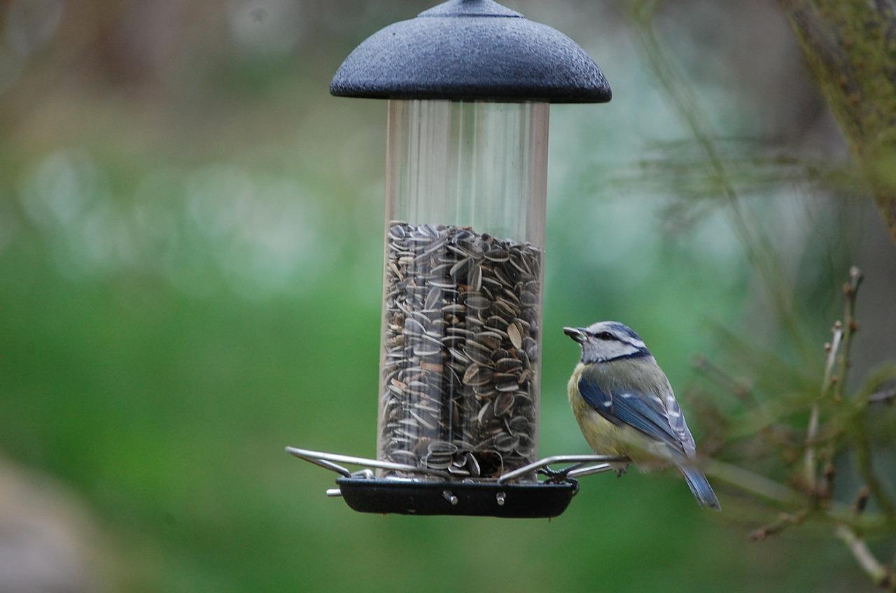Чем можно и чем нельзя кормить птиц зимой 2