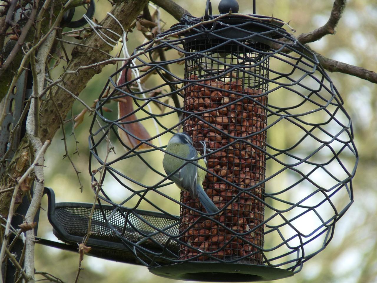 Чем можно и чем нельзя кормить птиц зимой 3